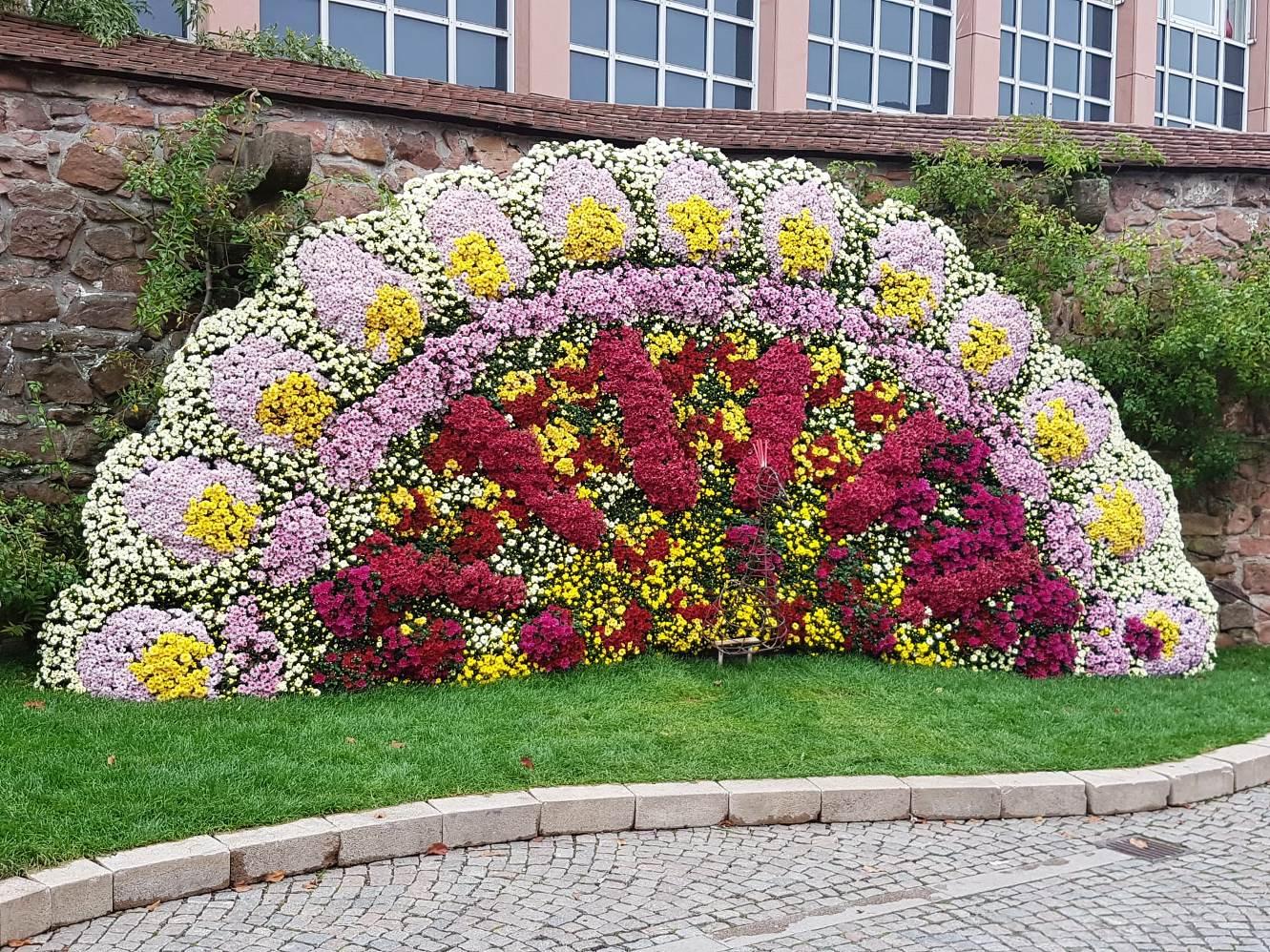 Besuch der Chrysanthema in Lahr